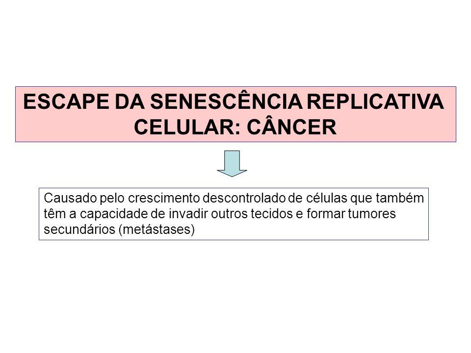 ESCAPE DA SENESCÊNCIA REPLICATIVA CELULAR: CÂNCER Causado pelo crescimento descontrolado de células que também têm a capacidade de invadir outros teci