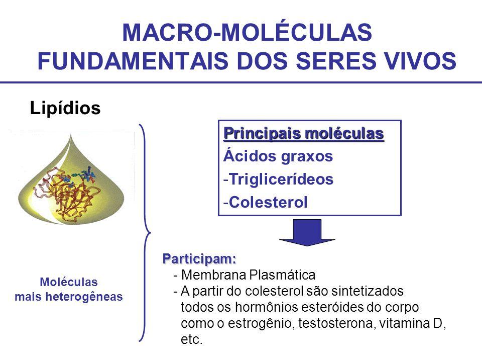 MACRO-MOLÉCULAS FUNDAMENTAIS DOS SERES VIVOS Proteínas Unidade fudamental: Aminoácidos Cadeia de aminoácidos Alimentos Molécula fundamental na estrutura celular do ser vivo