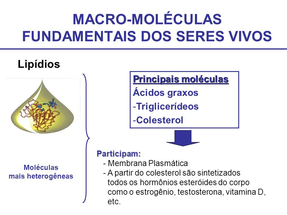 MACRO-MOLÉCULAS FUNDAMENTAIS DOS SERES VIVOS Lipídios Principais moléculas Ácidos graxos -Triglicerídeos -Colesterol Moléculas mais heterogêneas Parti