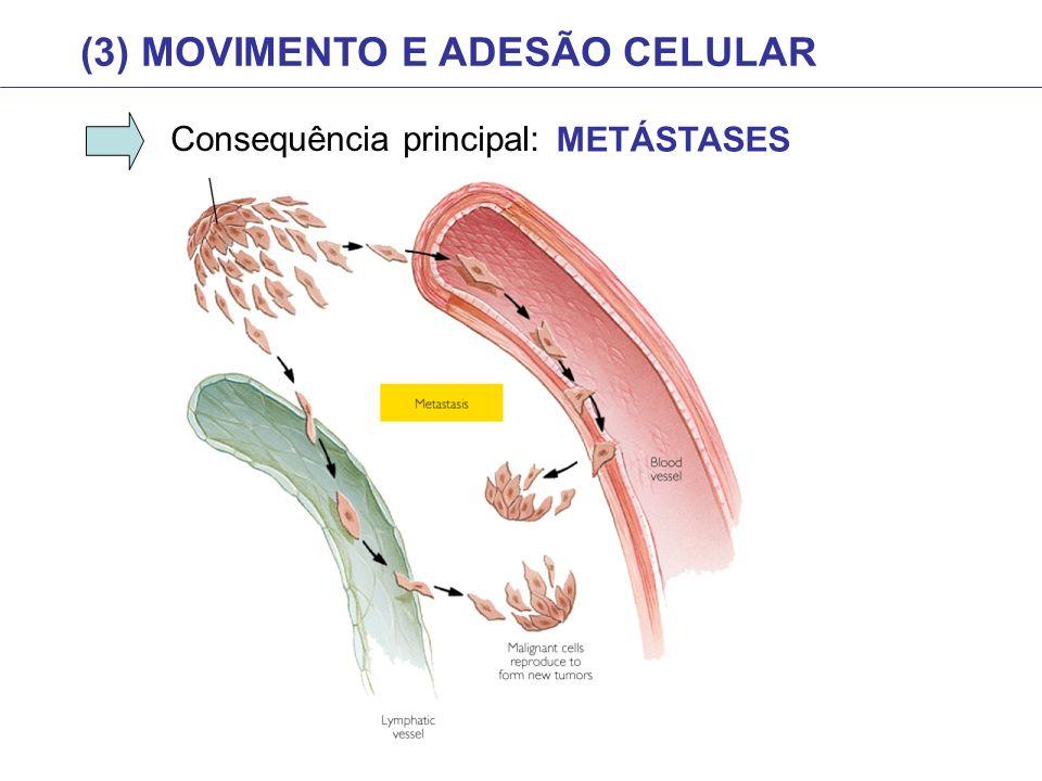 (3) MOVIMENTO E ADESÃO CELULAR Consequência principal: METÁSTASES