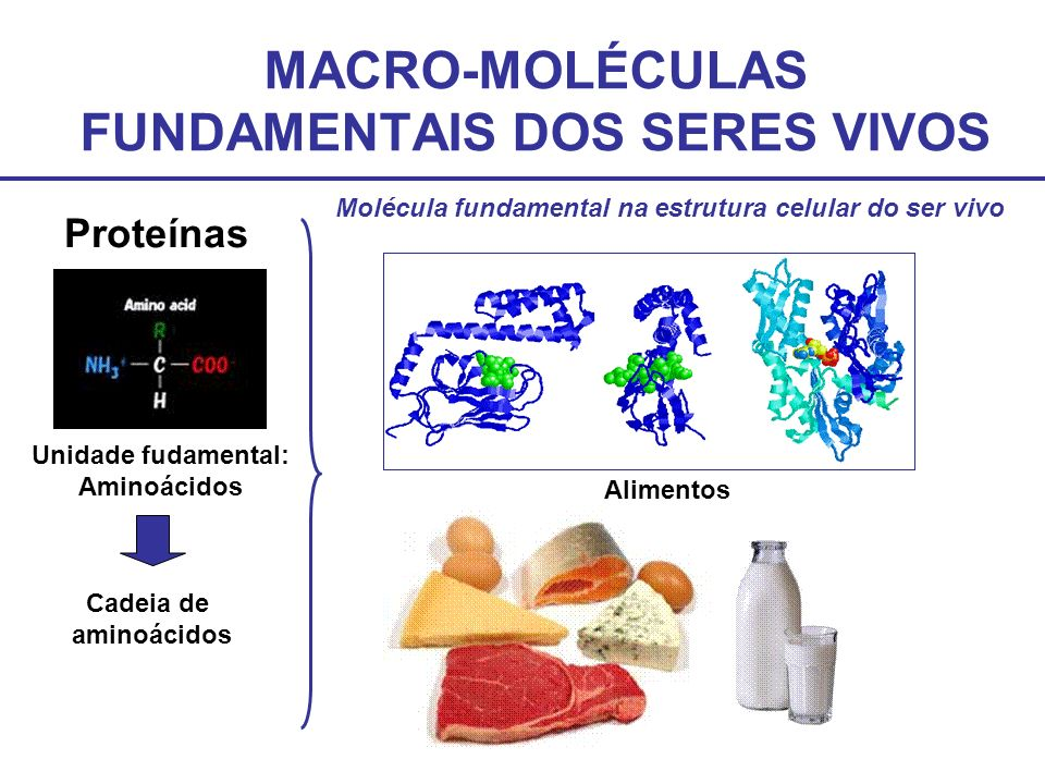 MACRO-MOLÉCULAS FUNDAMENTAIS DOS SERES VIVOS Proteínas Unidade fudamental: Aminoácidos Cadeia de aminoácidos Alimentos Molécula fundamental na estrutu
