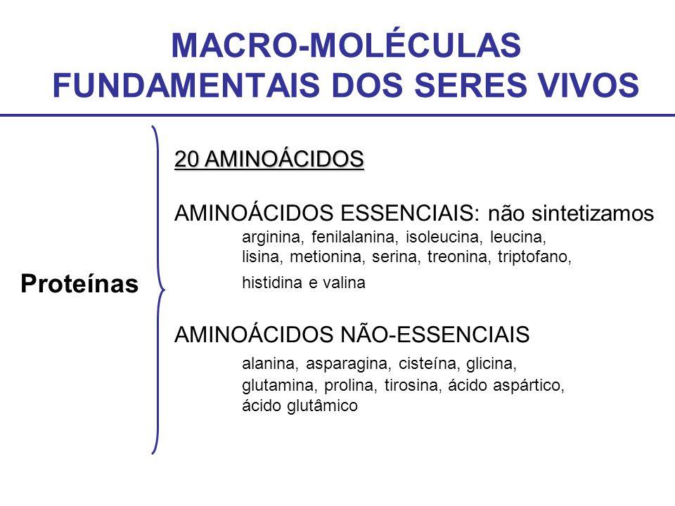 MACRO-MOLÉCULAS FUNDAMENTAIS DOS SERES VIVOS Proteínas 20 AMINOÁCIDOS AMINOÁCIDOS ESSENCIAIS: não sintetizamos arginina, fenilalanina, isoleucina, leu