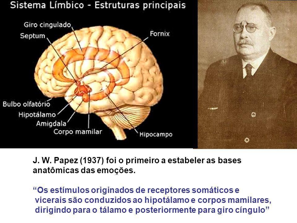 J. W. Papez (1937) foi o primeiro a estabeler as bases anatômicas das emoções. Os estímulos originados de receptores somáticos e vicerais são conduzid