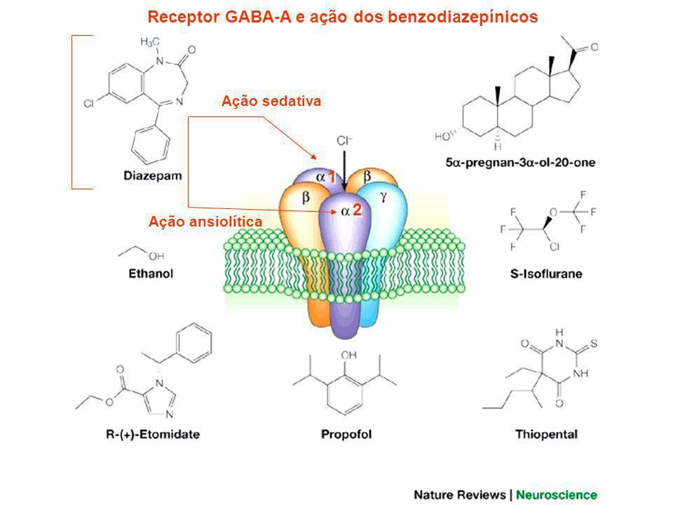 A FARMACODINÂMICA DOS BENZODIAZEPÍNICOS Os BZDs agem sobre os receptores para o Ácido Gama Amino Butiríco GABA-A, presentes em vários neurônios inibitórios do SNC.