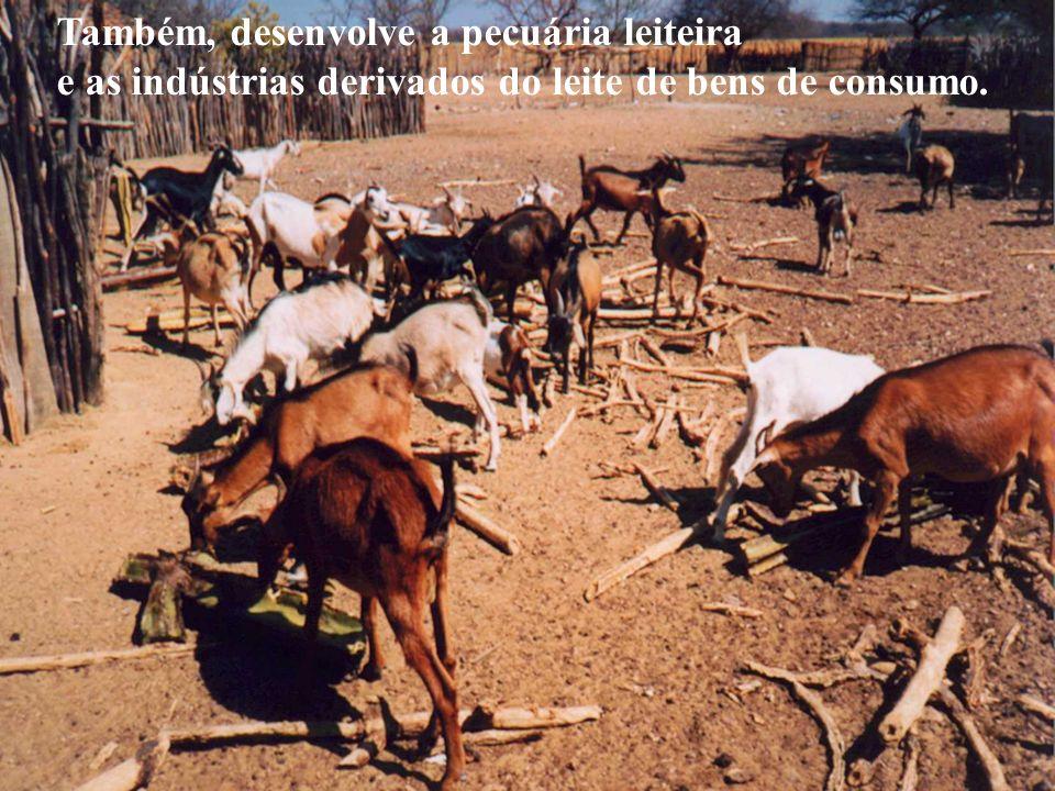 Também, desenvolve a pecuária leiteira e as indústrias derivados do leite de bens de consumo.