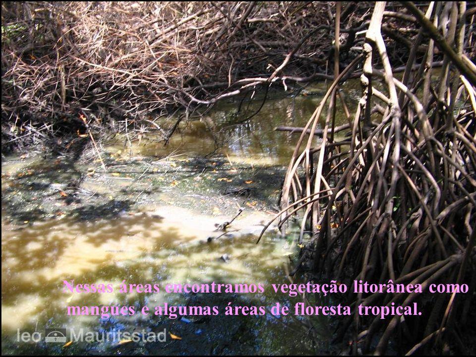 Nessas áreas encontramos vegetação litorânea como mangues e algumas áreas de floresta tropical.