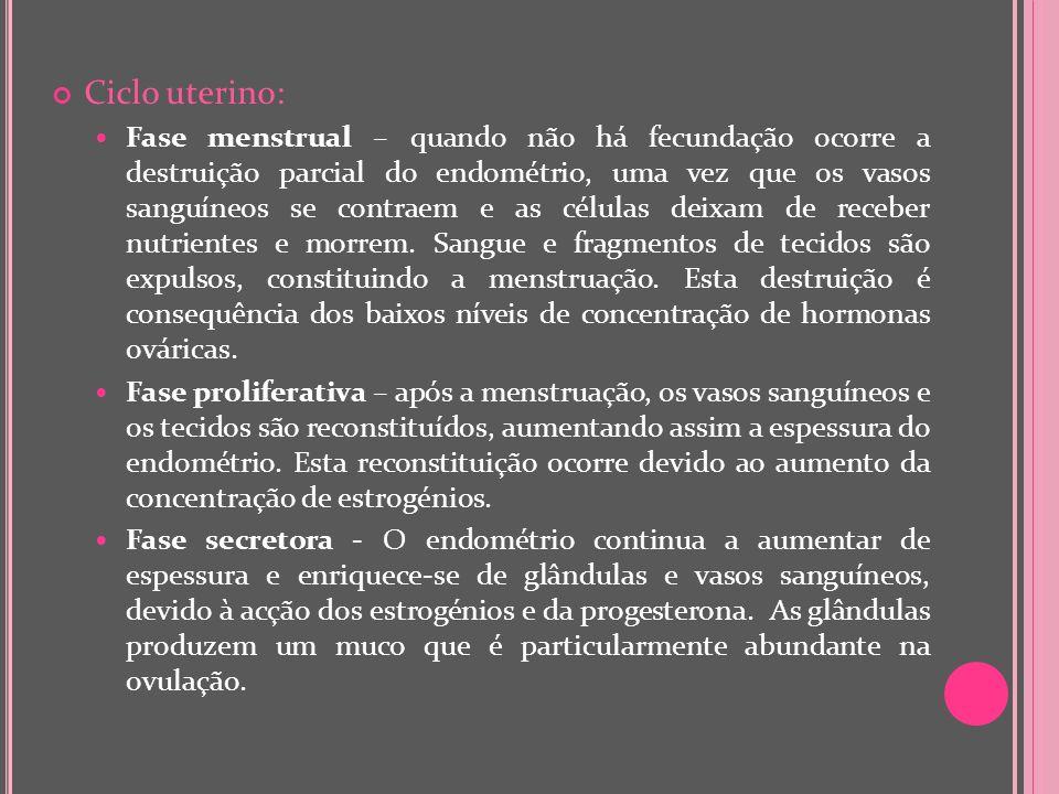 Ciclo uterino: Fase menstrual – quando não há fecundação ocorre a destruição parcial do endométrio, uma vez que os vasos sanguíneos se contraem e as c