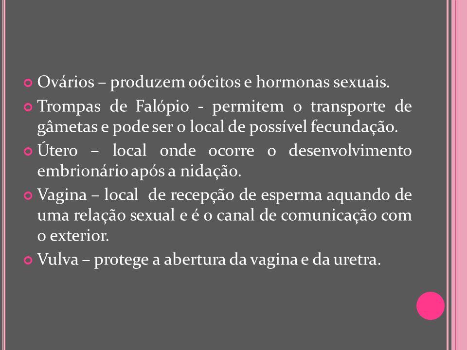 Ovários – produzem oócitos e hormonas sexuais. Trompas de Falópio - permitem o transporte de gâmetas e pode ser o local de possível fecundação. Útero