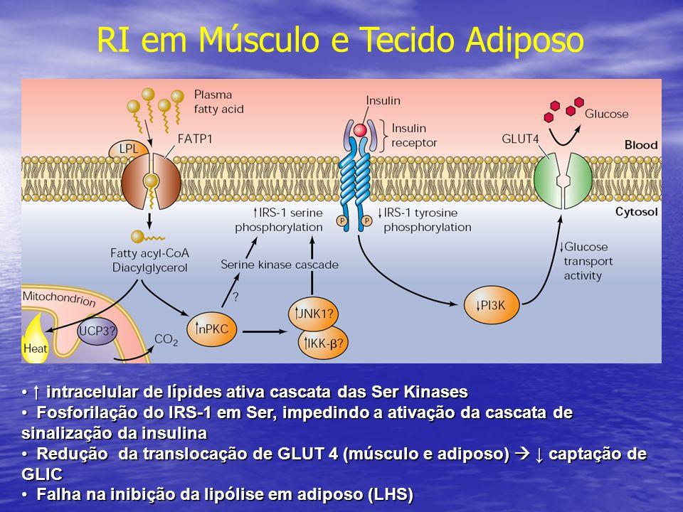 intracelular de lípides ativa cascata das Ser Kinases intracelular de lípides ativa cascata das Ser Kinases Fosforilação do IRS-1 em Ser, impedindo a