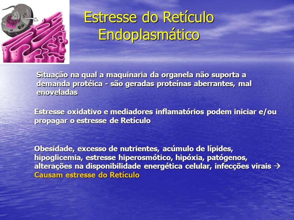 Estresse do Retículo Endoplasmático Situação na qual a maquinaria da organela não suporta a demanda protéica - são geradas proteínas aberrantes, mal e