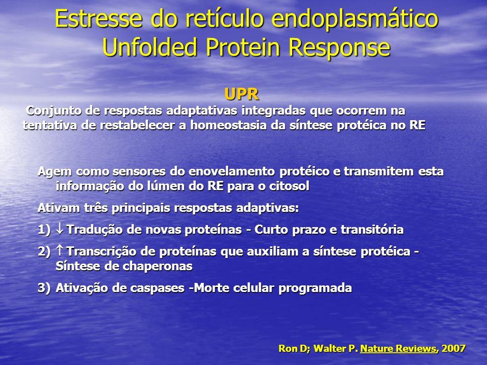 Estresse do retículo endoplasmático Unfolded Protein Response Agem como sensores do enovelamento protéico e transmitem esta informação do lúmen do RE