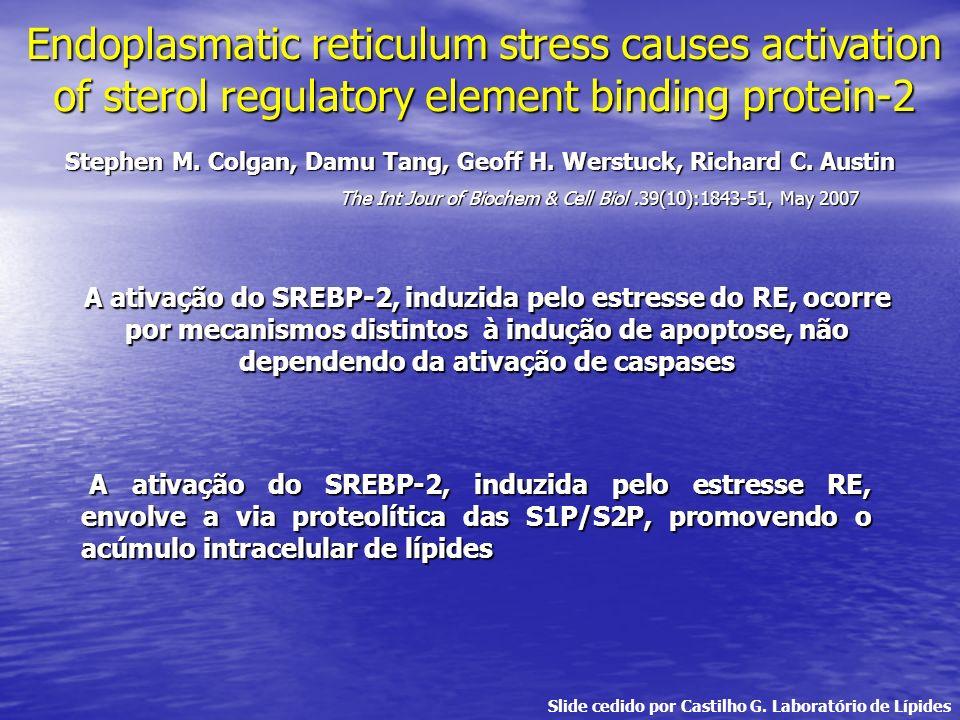 Endoplasmatic reticulum stress causes activation of sterol regulatory element binding protein-2 Stephen M. Colgan, Damu Tang, Geoff H. Werstuck, Richa