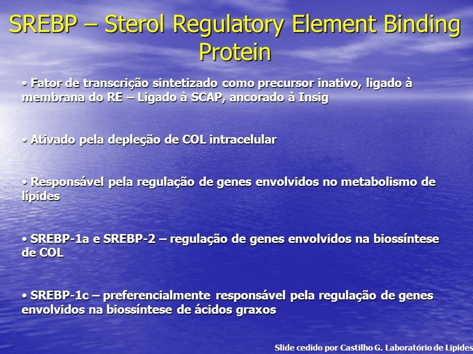 SREBP – Sterol Regulatory Element Binding Protein Fator de transcrição sintetizado como precursor inativo, ligado à membrana do RE – Ligado à SCAP, an