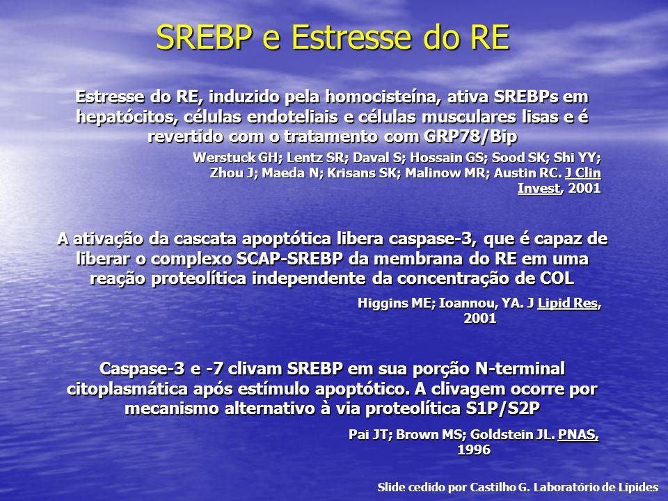 SREBP e Estresse do RE A ativação da cascata apoptótica libera caspase-3, que é capaz de liberar o complexo SCAP-SREBP da membrana do RE em uma reação