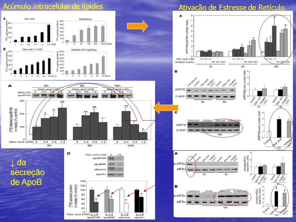 Acúmulo intracelular de lípides Ativação de Estresse de Retículo da secreção de ApoB