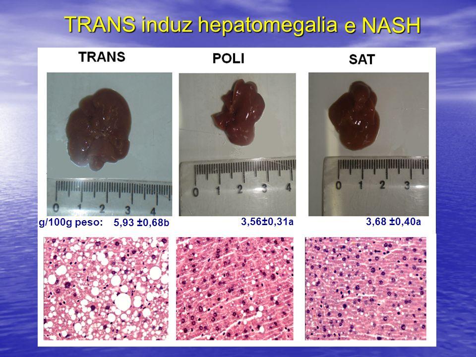 TRANS induz hepatomegalia e NASH 5,93 ±0,68 b 3,56±0,31 a 3,68 ±0,40 a g/100g peso: