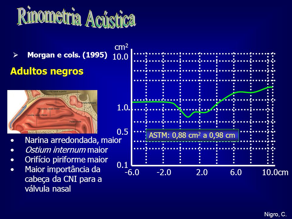 Nigro, C. -6.0 -2.0 2.0 6.0 10.0cm cm 2 10.0 1.0 0.5 0.1 Adultos negros Narina arredondada, maior Ostium internum maior Orifício piriforme maior Maior