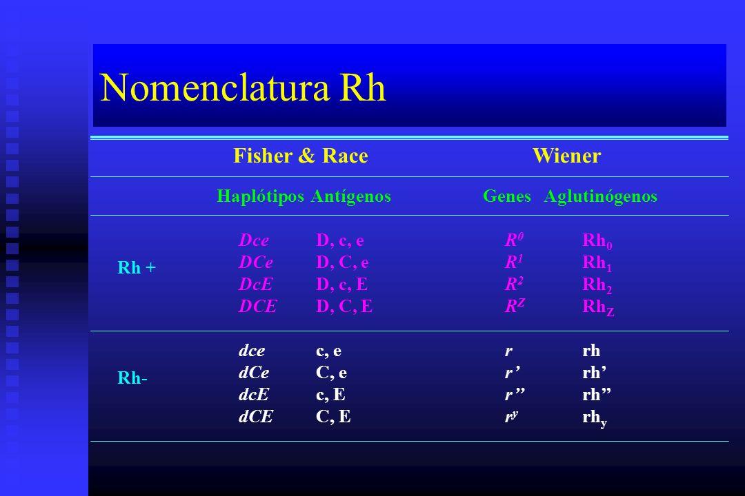 Nomenclatura Rh Fisher & RaceWiener HaplótiposAntígenosGenesAglutinógenos Dce DCe DcE DCE dce dCe dcE dCE D, c, e D, C, e D, c, E D, C, E c, e C, e c,