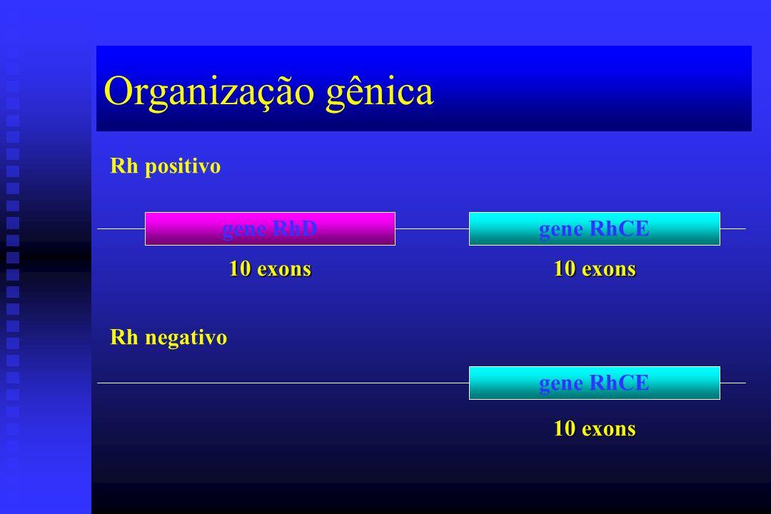 Organização gênica gene RhDgene RhCE Rh positivo Rh negativo gene RhCE 10 exons