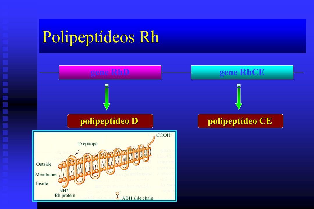 Polipeptídeos Rh gene RhDgene RhCE polipeptídeo D polipeptídeo CE