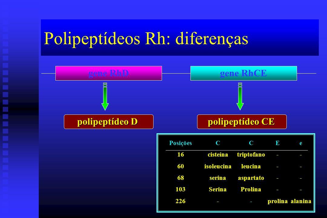 Polipeptídeos Rh: diferenças gene RhDgene RhCE polipeptídeo D polipeptídeo CE Posições166068103226CcisteínaisoleucinaserinaSerina-Ctriptofanoleucinaas