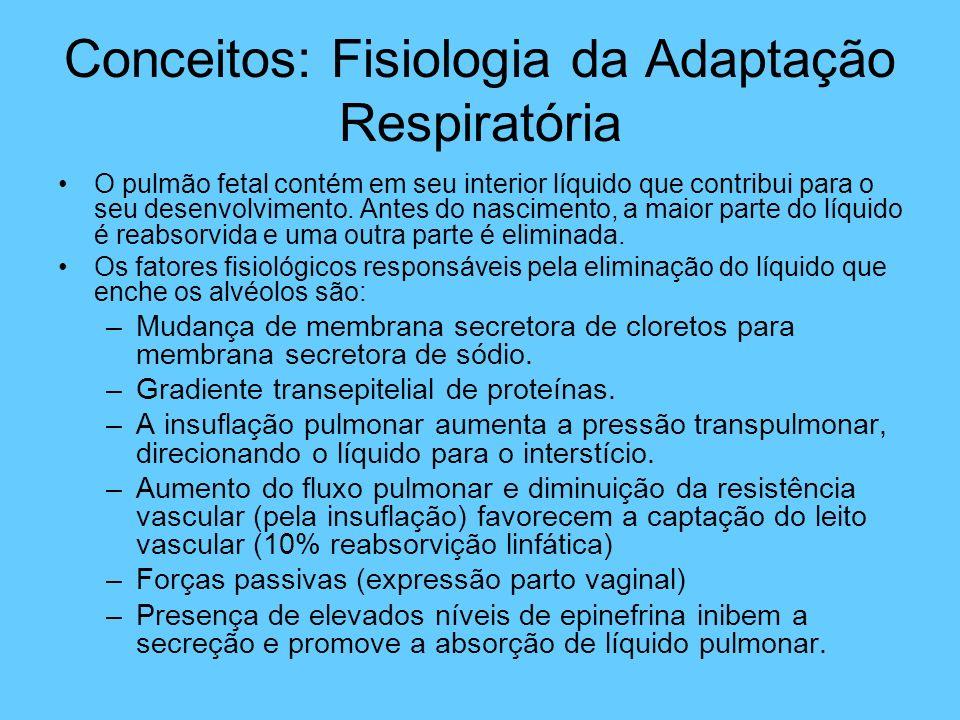 Conceitos: Fisiologia da Adaptação Respiratória O pulmão fetal contém em seu interior líquido que contribui para o seu desenvolvimento. Antes do nasci