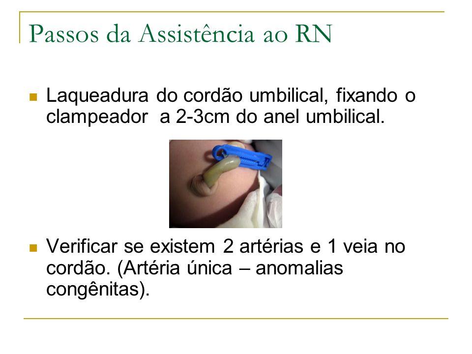 Passos da Assistência ao RN Laqueadura do cordão umbilical, fixando o clampeador a 2-3cm do anel umbilical. Verificar se existem 2 artérias e 1 veia n