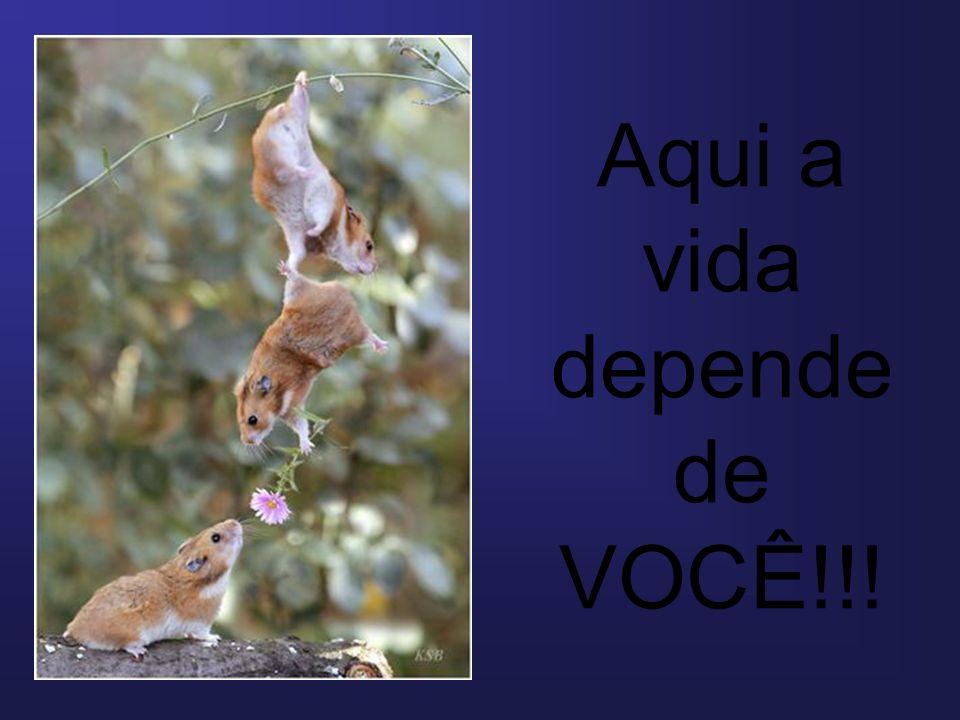 Aqui a vida depende de VOCÊ!!!