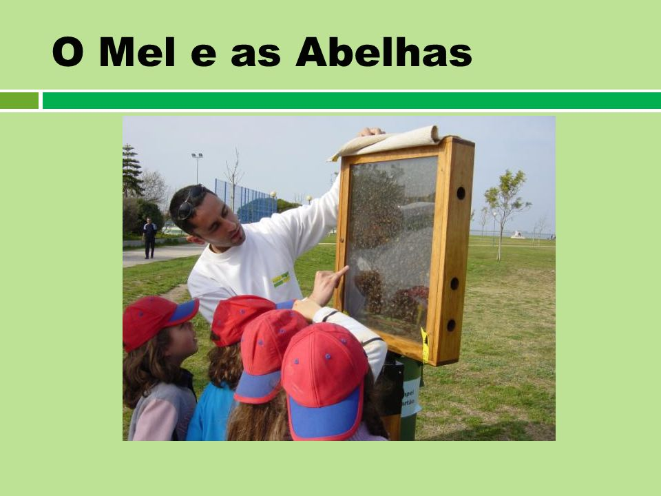 O Mel e as Abelhas