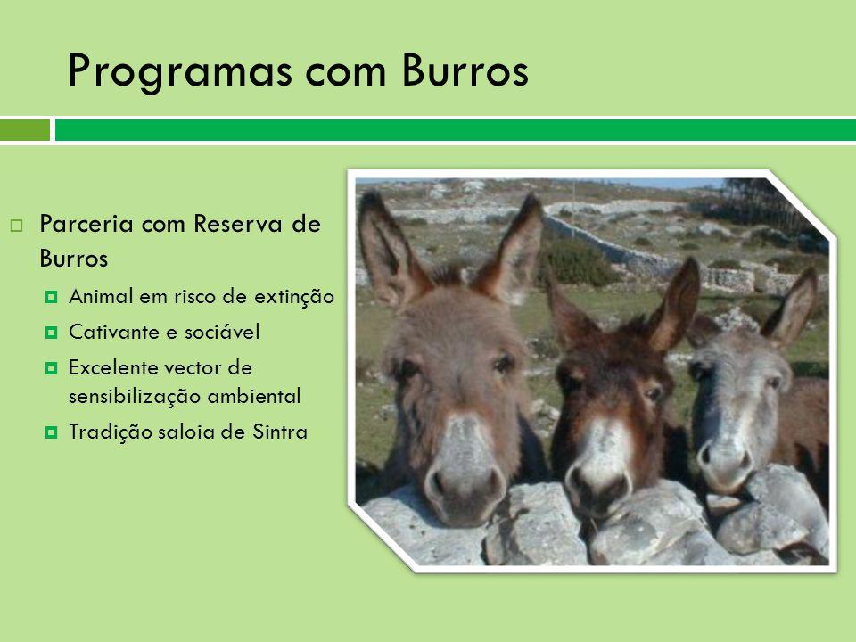 Parceria com Reserva de Burros Animal em risco de extinção Cativante e sociável Excelente vector de sensibilização ambiental Tradição saloia de Sintra