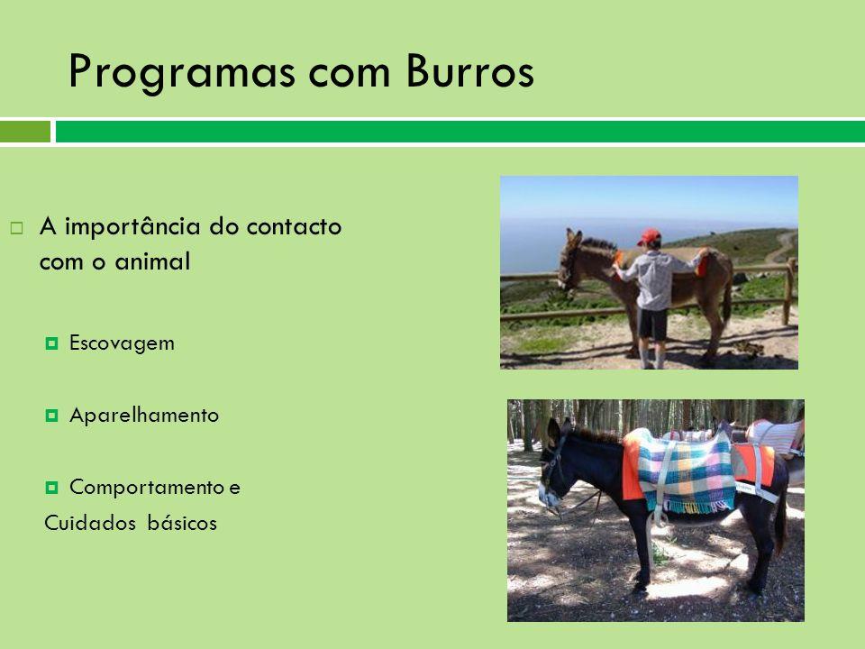 Programas com Burros A importância do contacto com o animal Escovagem Aparelhamento Comportamento e Cuidados básicos