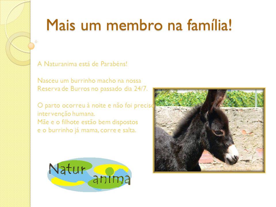 Mais um membro na família! A Naturanima está de Parabéns! Nasceu um burrinho macho na nossa Reserva de Burros no passado dia 24/7. O parto ocorreu à n