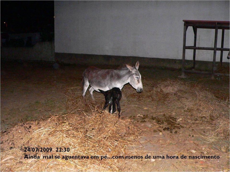 24/07/2009 22:30 Ainda mal se aguentava em pé...com menos de uma hora de nascimento