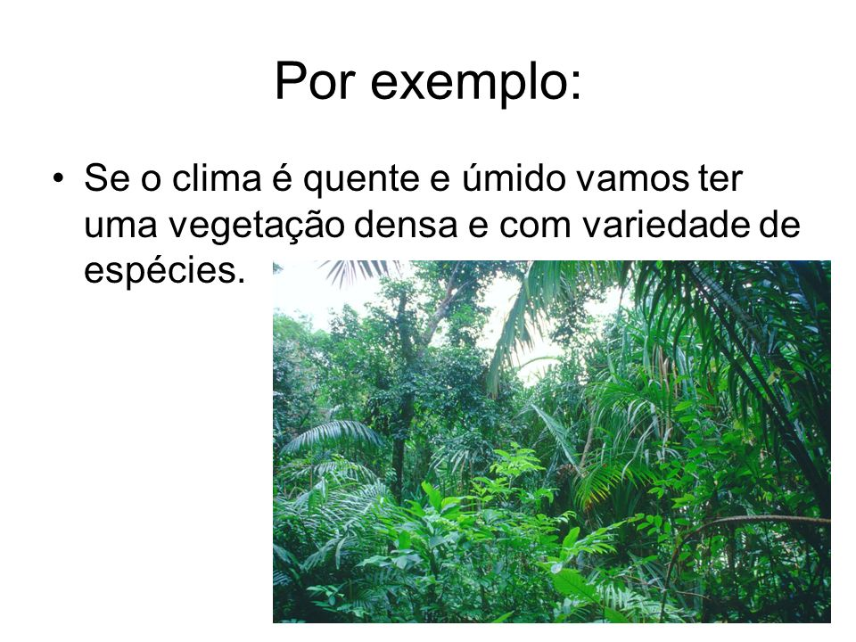 Por exemplo: Se o clima é quente e úmido vamos ter uma vegetação densa e com variedade de espécies.