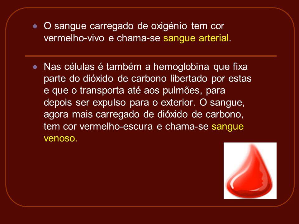 O sangue carregado de oxigénio tem cor vermelho-vivo e chama-se sangue arterial. Nas células é também a hemoglobina que fixa parte do dióxido de carbo