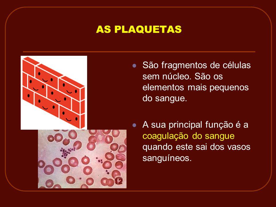 AS PLAQUETAS São fragmentos de células sem núcleo. São os elementos mais pequenos do sangue. A sua principal função é a coagulação do sangue quando es