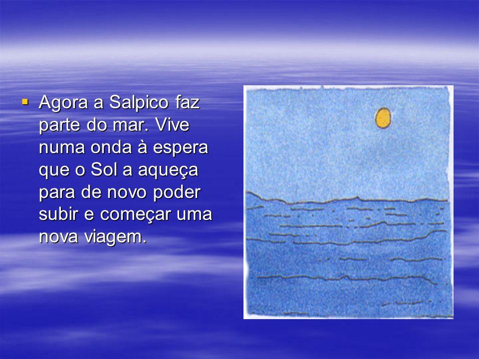 Agora a Salpico faz parte do mar. Vive numa onda à espera que o Sol a aqueça para de novo poder subir e começar uma nova viagem. Agora a Salpico faz p