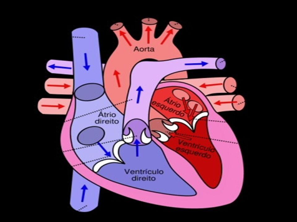 COMPOSIÇÃO DO SANGUE Hemácias ou eritrócitos – é repleto de hemoglobina e transporta oxigênio para o sangue.