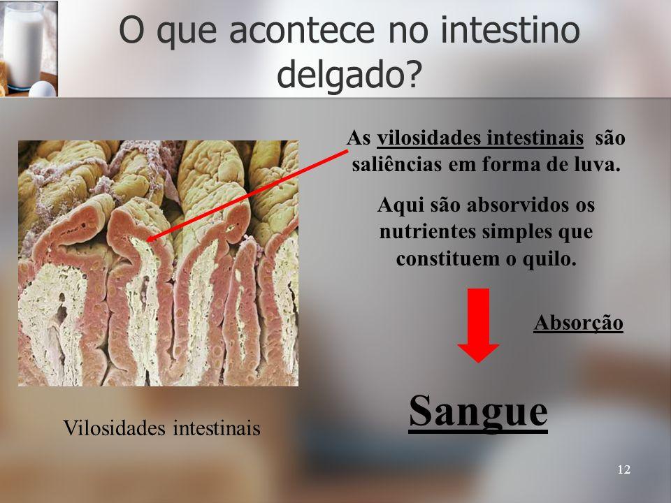 12 O que acontece no intestino delgado? Vilosidades intestinais As vilosidades intestinais são saliências em forma de luva. Aqui são absorvidos os nut