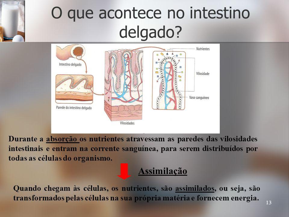 13 O que acontece no intestino delgado? Durante a absorção os nutrientes atravessam as paredes das vilosidades intestinais e entram na corrente sanguí