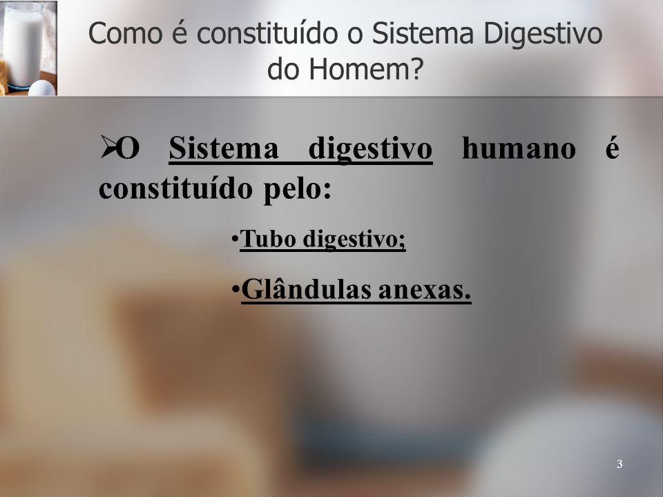 3 Como é constituído o Sistema Digestivo do Homem? O Sistema digestivo humano é constituído pelo: Tubo digestivo; Glândulas anexas.
