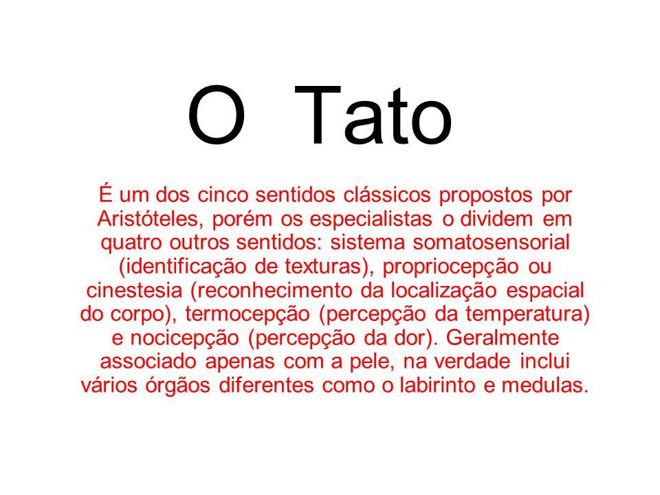 O Tato É um dos cinco sentidos clássicos propostos por Aristóteles, porém os especialistas o dividem em quatro outros sentidos: sistema somatosensoria