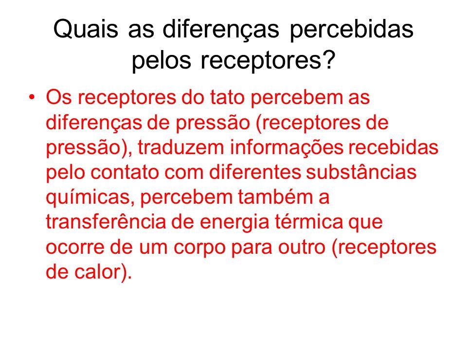 Quais as diferenças percebidas pelos receptores? Os receptores do tato percebem as diferenças de pressão (receptores de pressão), traduzem informações