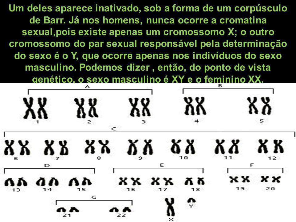 Um deles aparece inativado, sob a forma de um corpúsculo de Barr. Já nos homens, nunca ocorre a cromatina sexual,pois existe apenas um cromossomo X; o