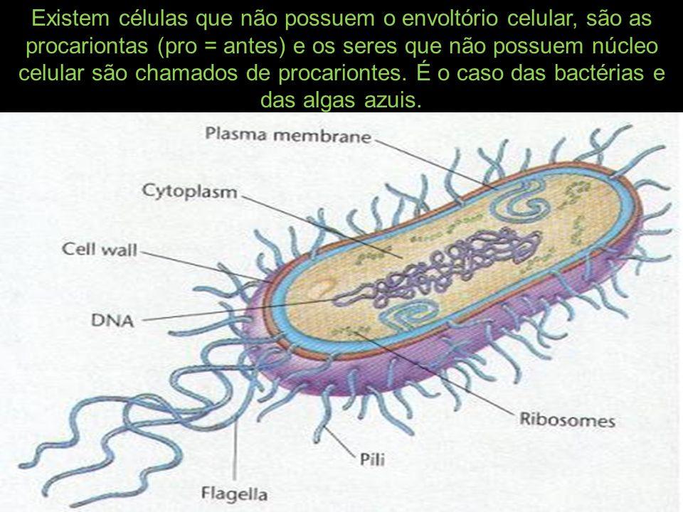 Existem células que não possuem o envoltório celular, são as procariontas (pro = antes) e os seres que não possuem núcleo celular são chamados de proc