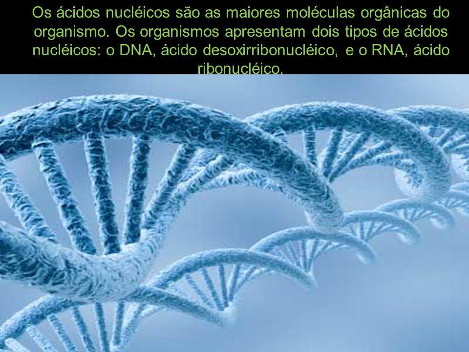 Os ácidos nucléicos são as maiores moléculas orgânicas do organismo.