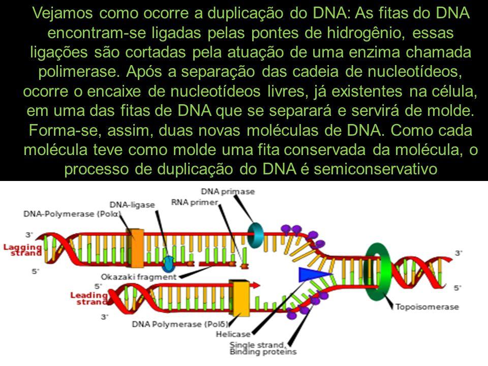 Vejamos como ocorre a duplicação do DNA: As fitas do DNA encontram-se ligadas pelas pontes de hidrogênio, essas ligações são cortadas pela atuação de uma enzima chamada polimerase.