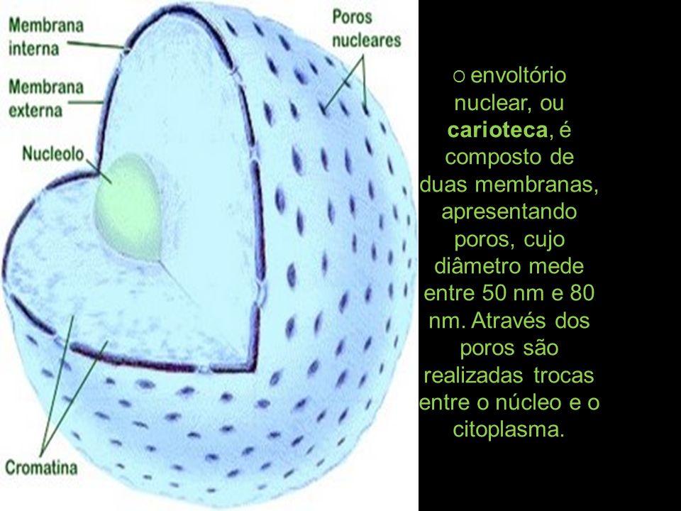 O envoltório nuclear, ou carioteca, é composto de duas membranas, apresentando poros, cujo diâmetro mede entre 50 nm e 80 nm.