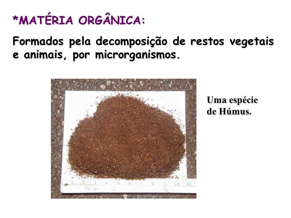 *MATÉRIA ORGÂNICA: Formados pela decomposição de restos vegetais e animais, por microrganismos. Uma espécie de Húmus.