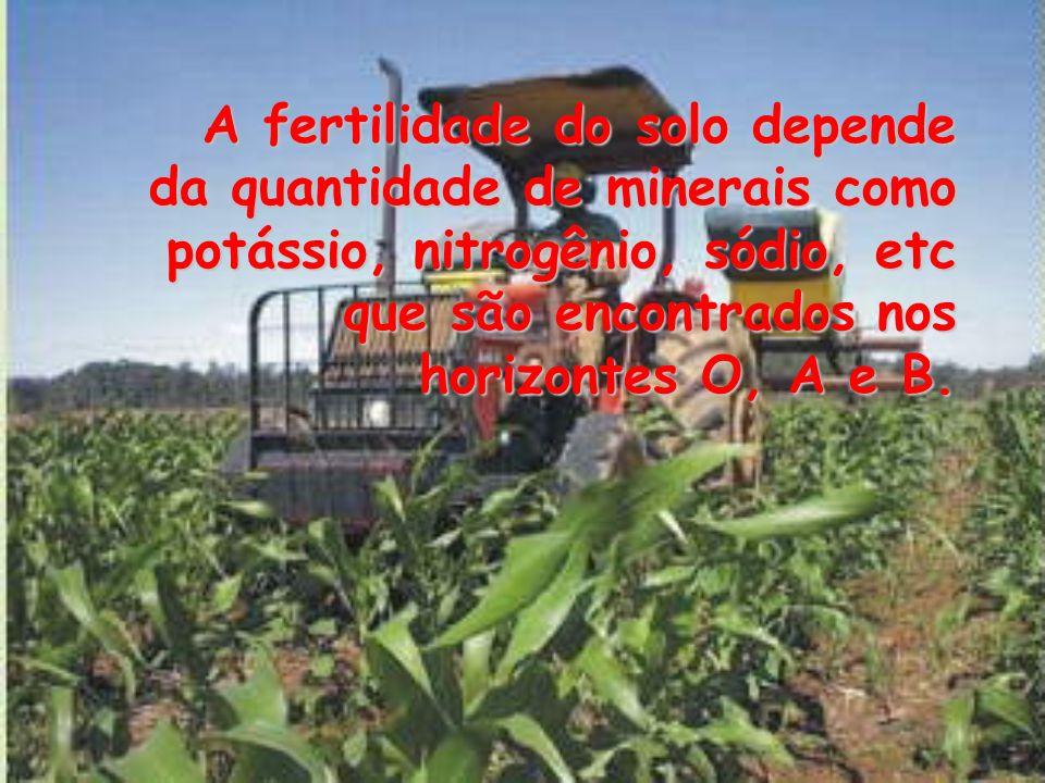 A fertilidade do solo depende da quantidade de minerais como potássio, nitrogênio, sódio, etc que são encontrados nos horizontes O, A e B. A fertilida